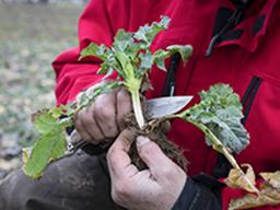Webinar: Regenerativ angebauter Raps und Wintergetreide im zeitigen Frühjahr