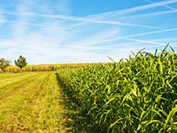 Webinar: Regenerativer Maisanbau