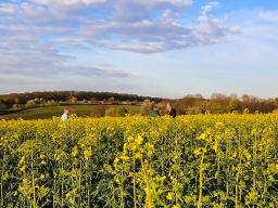 Webinar: Regenerativ angebauter Raps und Wintergetreide ab dem Vollfrühling