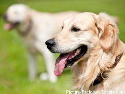 Webinar: Matrix-Inform für Tiere