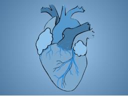 """Online-Seminar """"Prüfungswissen"""": Kardiologie mit Raphaela Lewetag"""
