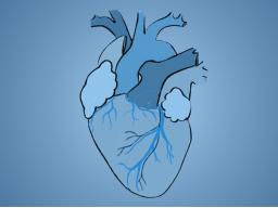 Online-Seminar Prüfungswissen: Kardiologie mit Raphaela Lewetag
