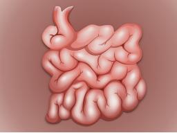 Webinar: Online-Seminar Prüfungswissen: Gastroenterologie mit Maria Kögler