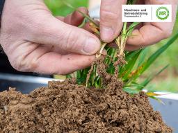Webinar: Regenerative Landwirtschaft - Boden und Pflanzen verstehen