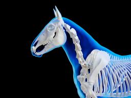 Halswirbelsäule, Teil 3: Ausbildung, Training und Therapie
