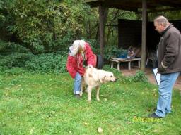 Webinar: Sachkunde Hund - Rassen, Entwicklungsgeschichte