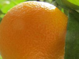 Webinar: Magic of colors -3 Das lebensfrohe Orange