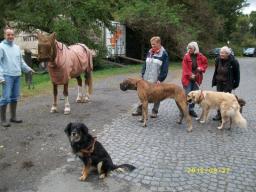Webinar: Sachkunde Hund - Der Hund in der Öffentlichkeit