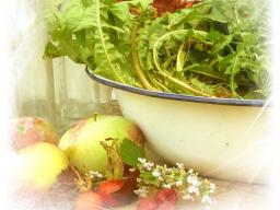Webinar: Grundlagen der Pflanzenheilkunde - Wirkstoffe