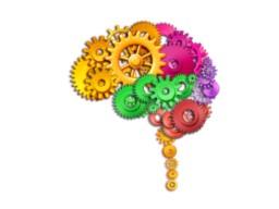 Webinar: Betriebsanleitung für unser Gehirn