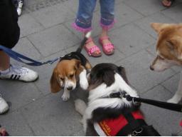 Webinar: Hunde-Alltags-Quiz T1
