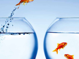 Webinar: ApasVital, Wasser in reiner Form