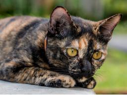 Webinar: Katzen barfen - Die Grundlagen