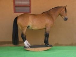 Webinar: Pferdewippen-Training II