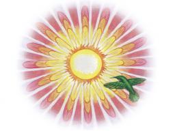 Webinar: Inspiration & Meditation - Thema: Müdigkeit & Erschöpfung