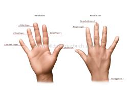 Webinar: Praxissprechstunde/Handpflege