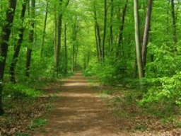 Webinar: Anleitung zum bewussten, sanften Atmen