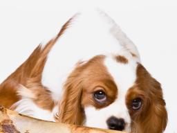 Webinar: Hundephysiotherapie: Einsatzgebiet und Behandlungsformen