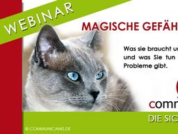 Webinar: Katzen - Problemverhalten. Stress erkennen, Stress vermeiden.