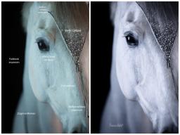 Webinar: Bildbearbeitung für Pferdefotografen 2.0 - Lightroom & Photoshop