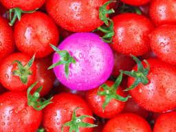 Webinar: Was haben Tomaten mit Marketing zu tun?