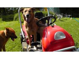 Webinar: Offene Fragerunde rund um den Hund