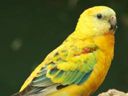 Webinar: Vögel: pflanzliche Beschäftigung contra Verhaltensprobleme
