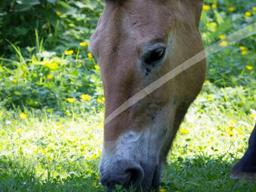 Webinar: Wildkräuter in der Tierernährung - Pferd