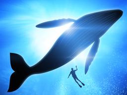Webinar: Der Weg der Wale-Was wir von Walen lernen können