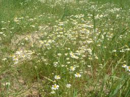 Webinar: Essbare Wildpflanzen