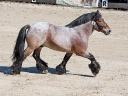 Webinar: Spreiz-Senk-Fuß beim Pferd
