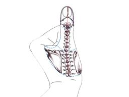 Webinar: Erkrankungen des Bewegungsapparates: Wirbelsäule und Gelenke