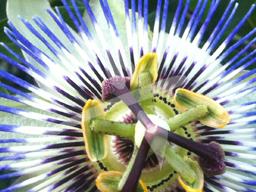 Webinar: Pflanzen für die Psyche