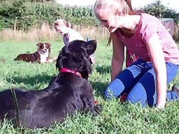 Webinar: Crossdogging Einsteiger Webinar