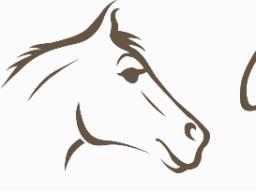 Webinar: Oft nicht erkannt - Magengeschwüre beim Pferd