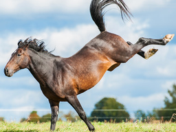 Webinar: Darm-Welten Pferd