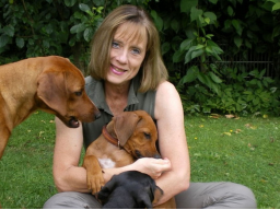 Webinar: Hundesprechstunde - Einzelcoaching