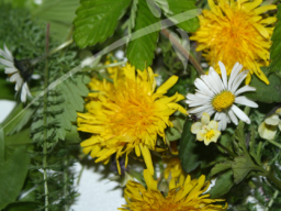 Webinar: Wildkräuter als Vitalkost