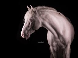 Webinar: Pferdefotografie im Studio - Der 4 - Wochen Kurs