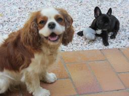 Webinar: Hundezucht allgemein