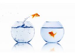 Webinar: Wasserstoff (H-) Wasser und seine Bedeutung in Therapie und Prävention