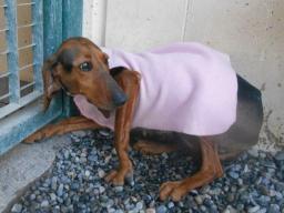Webinar: Ein Angsthund zieht ein - ein Plan für die ersten Tage!
