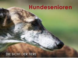 Webinar: Hundesenioren - was sie brauchen, was ihnen wichtig ist.