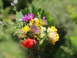 Webinar: Die Sommersonnenwende - Das Jahreskreisfest der höchsten Lichtkräfte, des Wendepunktes und der Sonnen- und Wetterpflanzen