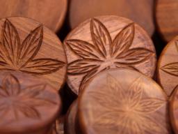 Webinar: Cannabis Pflanze CBD ohne THC