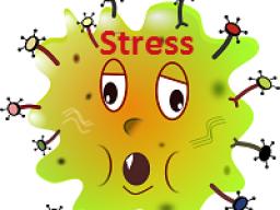 Webinar: Welche Auswirkungen hat Stress und was kannst du tun