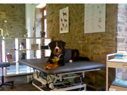 Webinar: Der hundephysiotherapeutische Untersuchungsgang