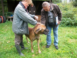 Webinar: Sachkunde Hund - Einführungswebinar
