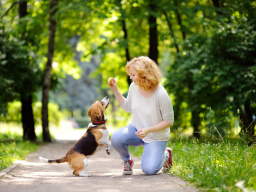 Tricksen mit dem Hund - Teil 3
