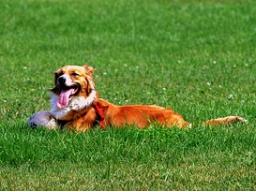Webinar: Stress bei Hunden
